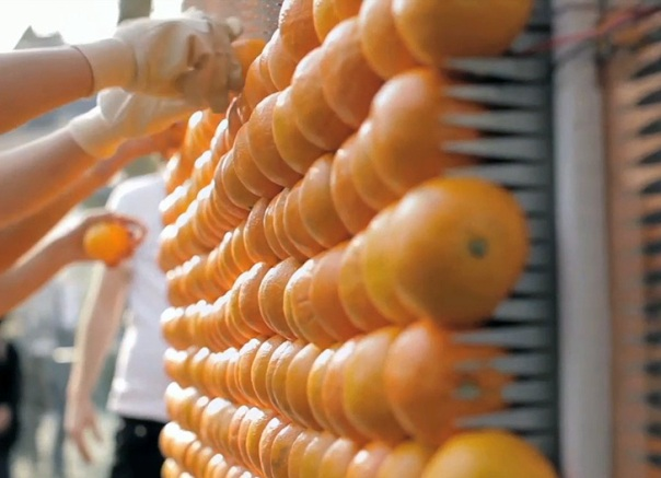 Медные и цинковые шипы для крепления апельсинов