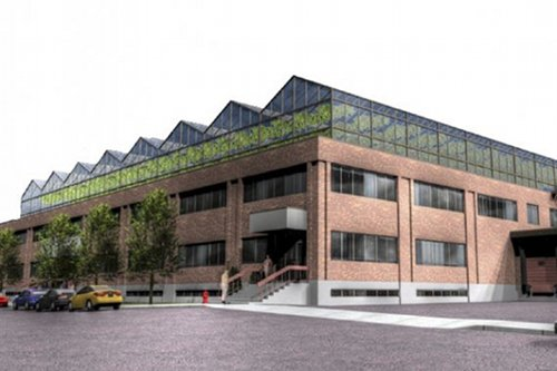 Теплица на крыше городского здания