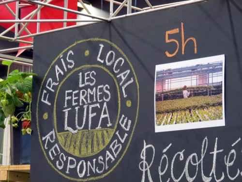 Овощи Lufa через 5 часов после сбора попадают на обеденный стол
