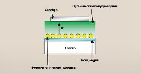 Фотосинтез в солнечных батареях